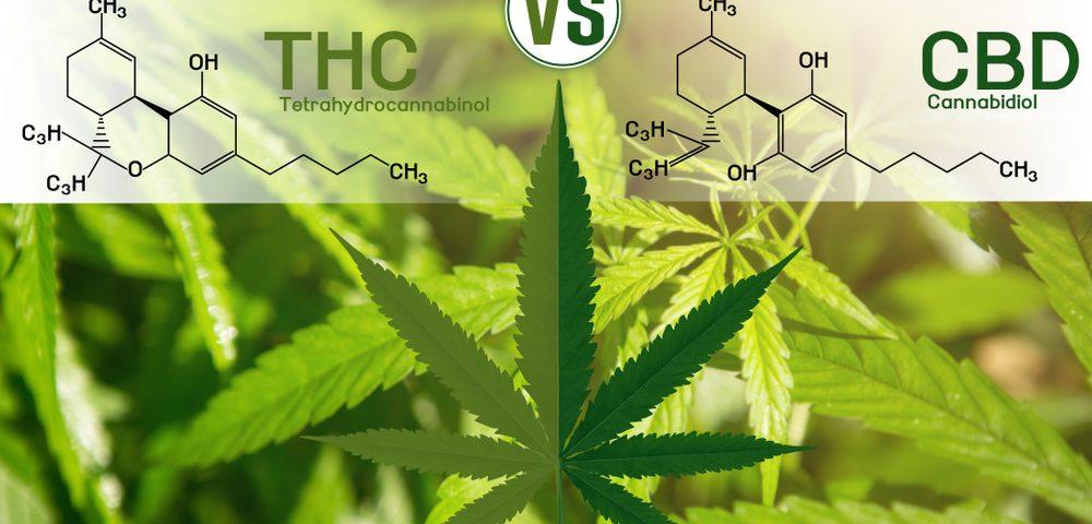 CBD-natural-THC vs. CBD