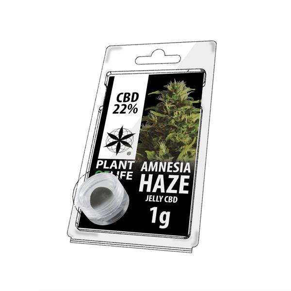 Amnesia Haze Hasch-cbd-natural