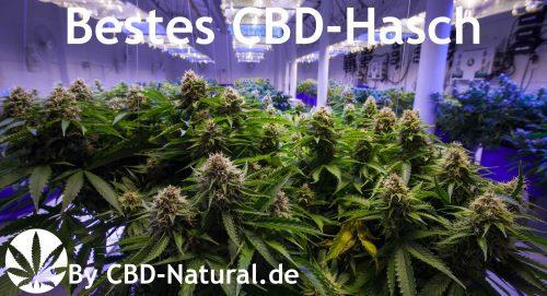 cbd-hasch-plantage-cbd natural-pic