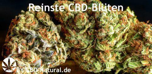 reinste-cbd-blüten-cbd-natural